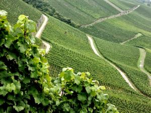 Weinanbaugebiet Mosel