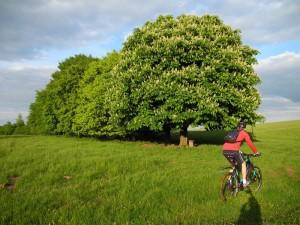 Radwandern um Schweich herum